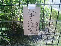hachinosuu_2.jpg