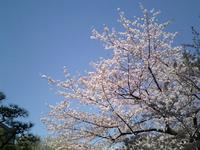 hibiya2008_2.jpg