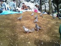 sakura2008_4.jpg